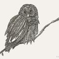 Illustrations by Vilmoncela
