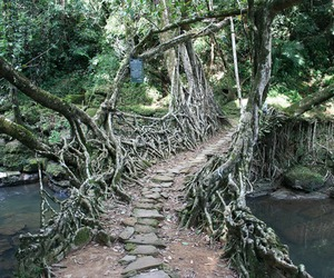 Incredible Root Bridges of Cherrapunji