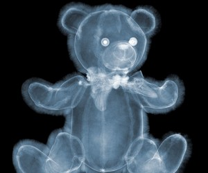 Incredible X-Ray Photography by Nick Veasey
