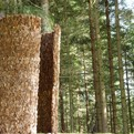 Inner Forest. Landscape Pavilion
