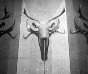 Italian Moose Shower Head
