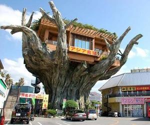 Japanese Treehouse Café