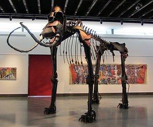 Jud Turner Creates Columbia Mammoth Skeleton