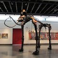 Jud Turner Creates Columbia Mammoth Skeleton