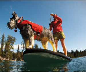 K-9 Float Coat | by Ruffwear