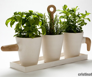 Kitchen herb in pot by Cristina Toledo