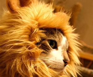 Amusing Lion's Mane Cat Hat