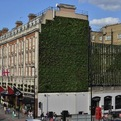 Living Wall by London