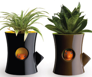 Log And Squirrel Plant Pot Wins At TIFF 2011