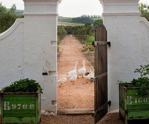 Lost And Found Paradise at Babylonstoren, Africa