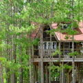 Lynn Knowlton's Eco Friendly Tree Fort