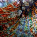 Macro Reef Dwellers