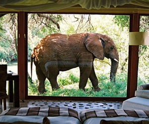 Makanyane Safari Lodge | South Africa