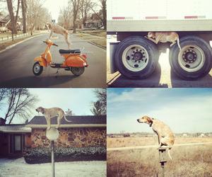 Meet Maddie The Coonhound.