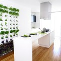 Mini Vertical Garden for your Kitchen, Patio or Balcony