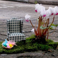 Miniature Gardening by The Pothole Gardener