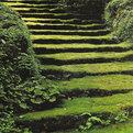 Moss Acres