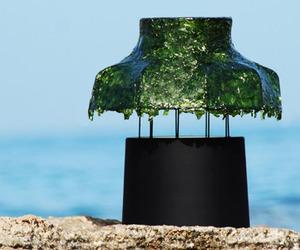 Nir Meiri | Shiny Seaweed