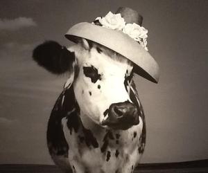 One Haute Holstein. Oh La vache!