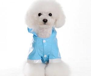 Patent Hooded Dog Raincoat