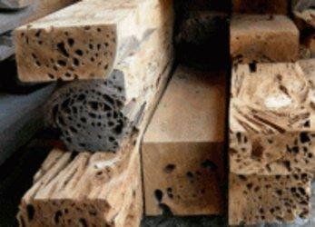 Pecky Cypress Timbers
