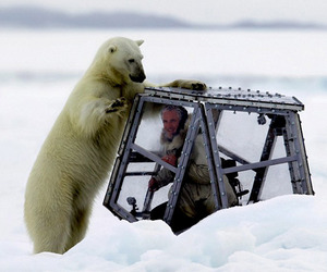 Photographer Comes Face to Face With a Hungry Polar Bear