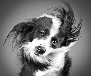 Photos of Dogs Shaking Their Heads