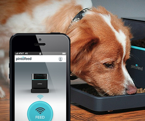 Pintofeed | Automatic Pet Feeder