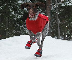 Polar Trex Dog Boots