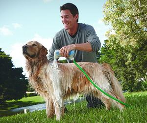 Rapidbath | Dog Bathing System