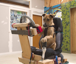 Rescue Dogs Learn How to Drive a Car