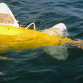 Robotic Fish Scan Water For Pollution