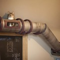 Secret Steampunk Cat Tunnel | Because We Can
