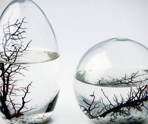 Self-Sustaining EcoSphere by NASA: