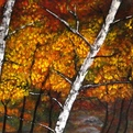 Silver Birch In Fall