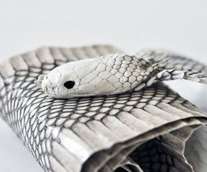 Snakewrap Belt and Clutch by Luxirare