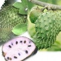 Soursop Leaves Kill Cancer Cells