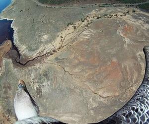 Spycams on Bird's Backs Capture Breathtaking Aerial Photos