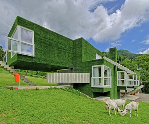 Synthetic Grass-Covered House