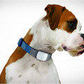 Tagg | The Pet Tracker