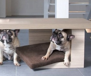 Tavolato Pet Bed by Petsmood