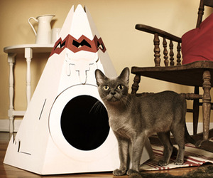 Teepees and Cabins for Cool Cats