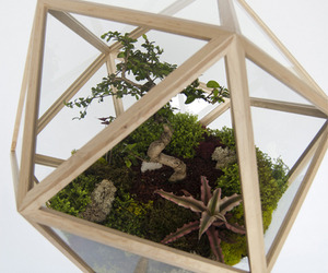 The All Around Terrarium