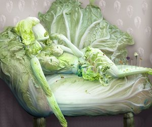 The Fantasies of Chinese Cabbage (all 16)