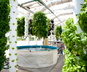 The Farm of the Future: a hi-tech living ecosystem