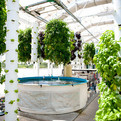 The Farm of the Future: Aquaponics