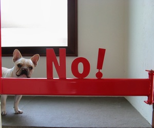 The No! gate by Etchboo design