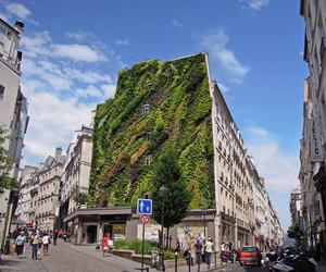 The Oasis of Aboukir: Green Wall by Patrick Blanc