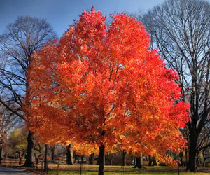 Time-Lapse of Fall in Central Park