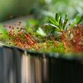 Tiny Taxonomy by Rosetta Sarah Elkinr